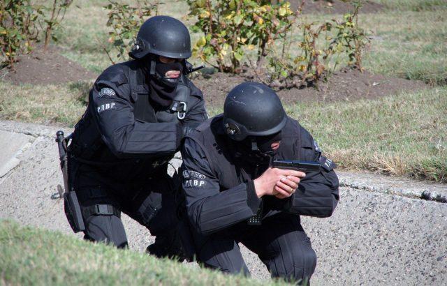 Хвърлят армията и полицията в борбата със заразените прасета